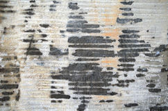 Grunge Cement Wall Stock Photography
