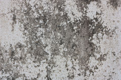 Grunge cement wall. Grunge cement wall, For texture and background Royalty Free Stock Photos