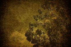 Grunge cherry tree. A grunge image of a cherry tree in the sky Royalty Free Stock Photography
