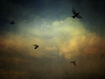 Grunge cloudy sky background with birds Stock Photography