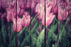 Grunge conceptual purple color flower tulips. With green leaves on wooden board background Royalty Free Stock Images