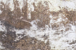 Grunge concrete or cement wall background royalty free stock image