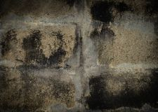 Grunge Concrete, Lichen on the concrete wall royalty free stock photo