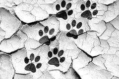 Grunge cracked Paw print icon Stock Photos