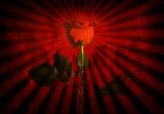 grunge czerwona róża Zdjęcie Royalty Free