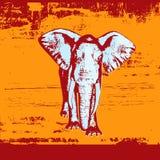 grunge d'éléphant de fond Photos stock