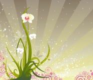 Grunge d'orchidée images libres de droits