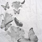 Grunge da borboleta e das flores Foto de Stock Royalty Free