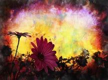 Grunge da flor da margarida Foto de Stock