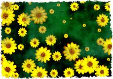 Grunge daisies Stock Photo