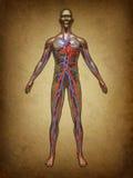 Grunge de circulation de sang humain Images libres de droits
