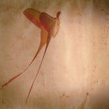 Grunge de la polilla de la mariposa de la cola larga viejo Imagenes de archivo
