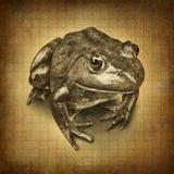 Grunge de la rana Fotografía de archivo libre de regalías