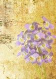Grunge de la viola Imagen de archivo libre de regalías