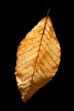 Grunge de lame d'automne Image libre de droits