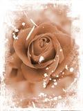 Grunge de Rose Images libres de droits