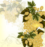 Grunge design with realistic crustier of  wine grapes and orname Royalty Free Stock Image