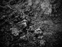 Grunge dirt texture. Grunge disstressed water dirt texture. photo taken april 2015 stock photos