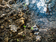 Grunge dirt texture Royalty Free Stock Photos