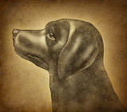 Grunge Dog. On an old parchment paper texture as a symbol of veterinary canine health care for house pets and veterinarian services or training of mixed breed stock illustration