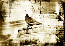Grunge dove with textured border Royalty Free Stock Images