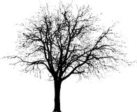 grunge drzewo Obrazy Royalty Free