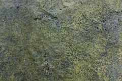 Grunge Effect Background Texture of Lichen and some Moss on a Rock.  Royalty Free Stock Image