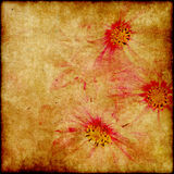Grunge elegance flower paper Stock Photography