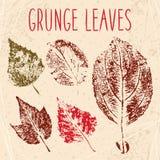 Grunge Fallen Leaves Texture Stock Photo