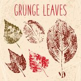 Grunge fallen leaves texture Stock Photo