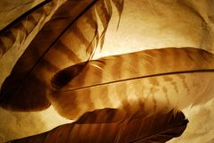 Grunge feather background Stock Photography