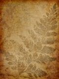Grunge fern background Royalty Free Stock Photography