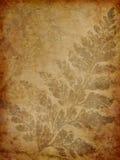 Grunge fern background Royalty Free Stock Photography