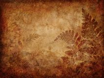 Grunge fern background Royalty Free Stock Photos