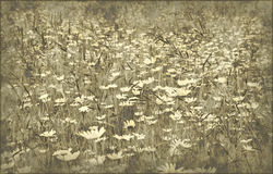 Grunge field of daisy flowers Royalty Free Stock Photo