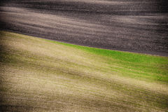 Grunge field waves background, South Moravia Stock Photo