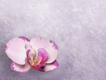 Grunge floral background. Violet magnolia Royalty Free Stock Photography