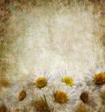 Grunge Floral Background stock photos