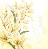 Grunge floral background with beige lily Stock Image