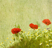 Grunge floral background with poppies Royalty Free Stock Image