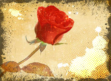 Grunge floral background with red rose. Stock Photo