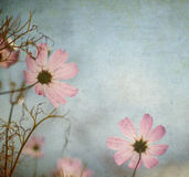 Grunge floral background with space for text or image Stock Photography