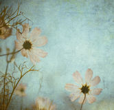 Grunge floral background with space for text or image Royalty Free Stock Photo