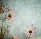 Grunge floral background with space for text or image Royalty Free Stock Photography