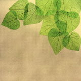 Grunge Floral Border of Leaves Royalty Free Stock Photography