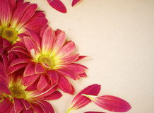 Grunge Floral Flower Background Stock Photos