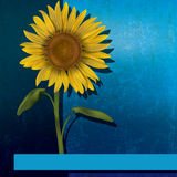 Grunge floral illustration with sunflower Stock Image
