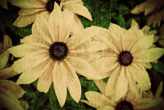 Grunge Flower Background. A grunge style, distressed, aged background image of flowers stock photography