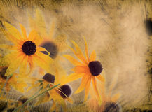 Grunge flower background. Grunge old paper flower background Royalty Free Stock Images