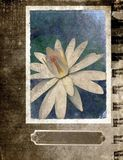 Grunge flower background Postcard Royalty Free Stock Photo